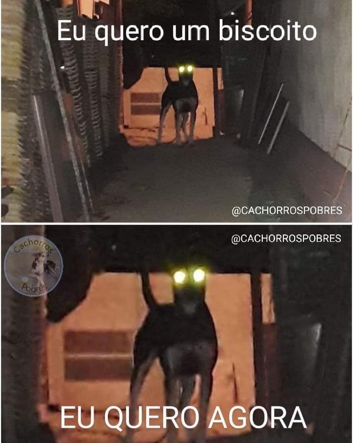 Dog maligno - meme