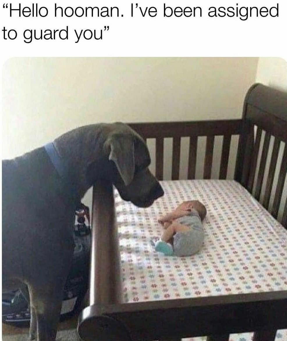 Guard doggo - meme