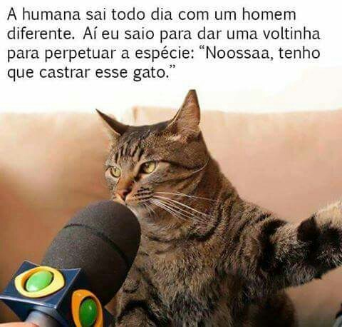 NosssssAaaaaa - meme