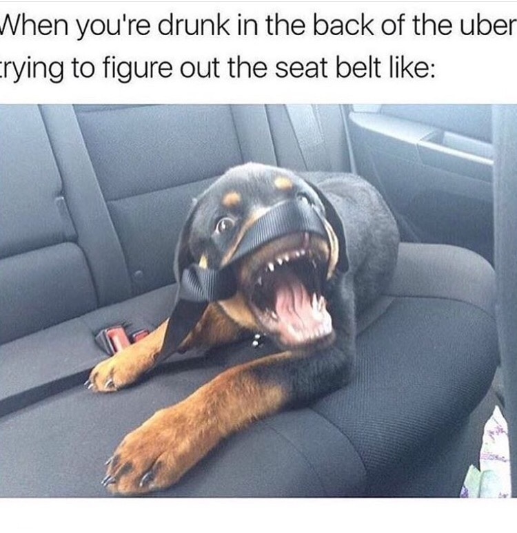 I've never taken an uber