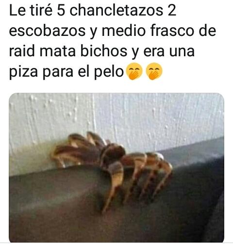 Aracno wevo - meme