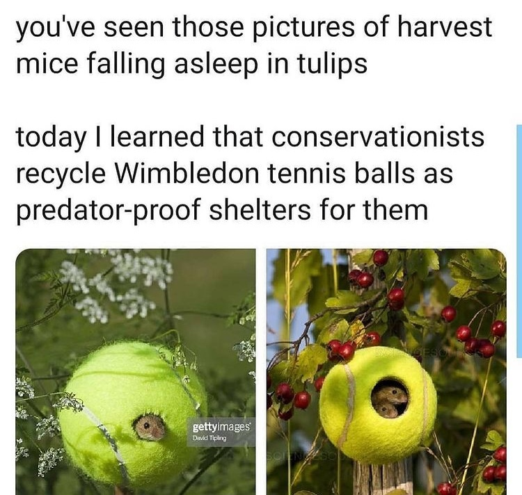 tennis ball house - meme