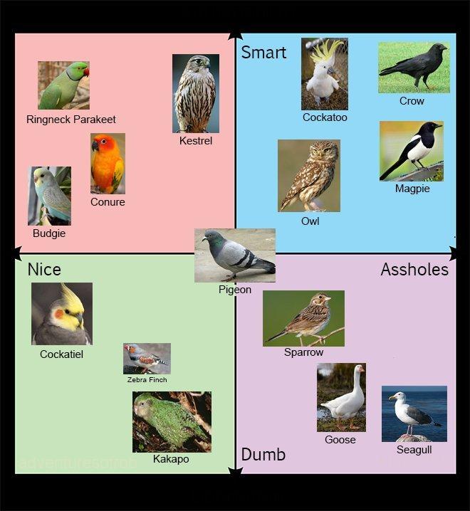 Bird chart.
