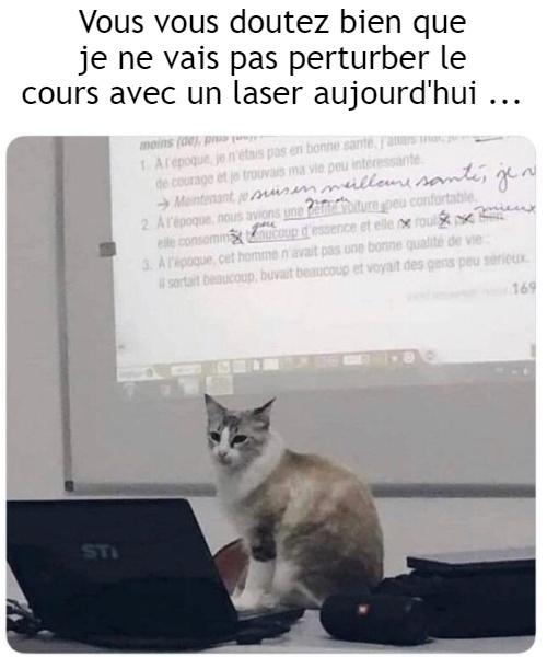 Maître Chat - meme