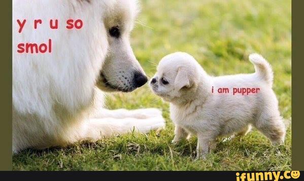 Pupper - meme