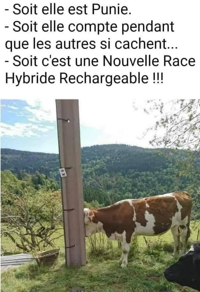 La vache ! - meme