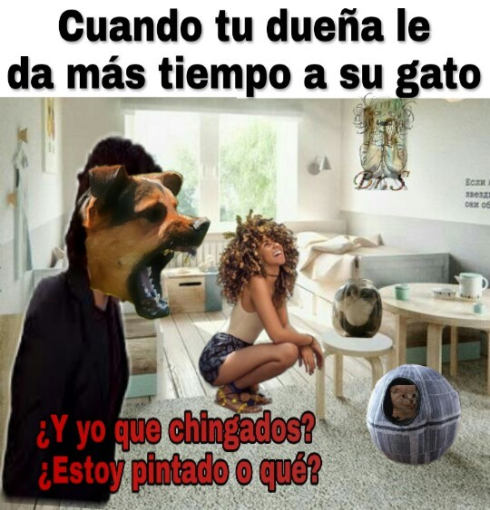 Mascotas - meme