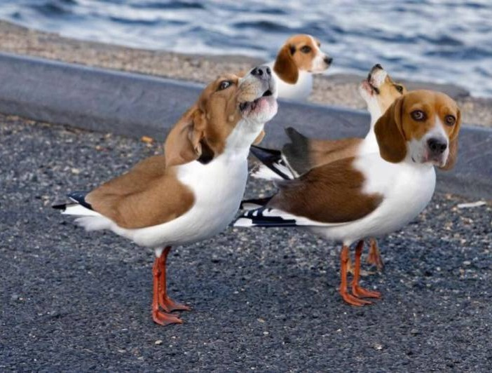 Beagles - meme