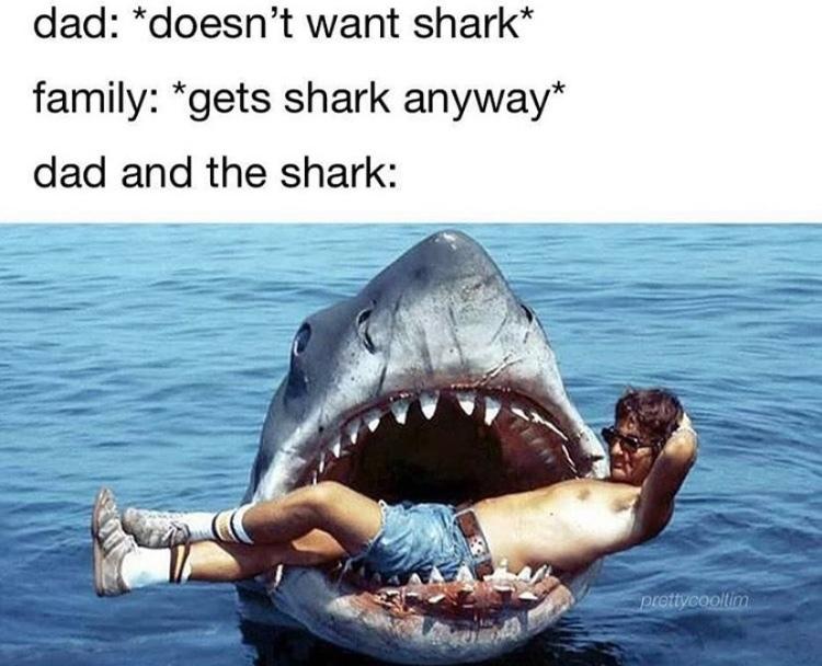 shark - meme