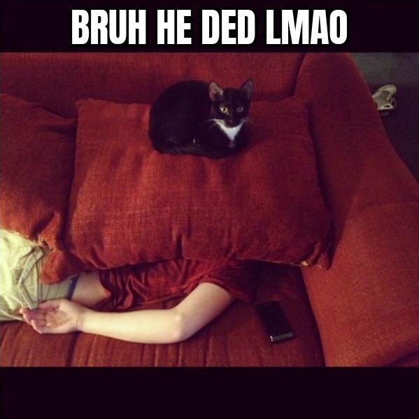 Cat killed the human - meme