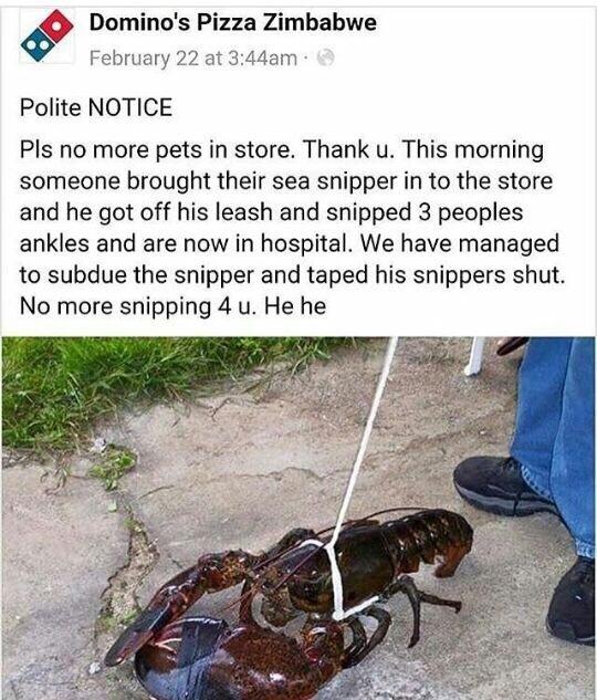 sea snippers r bad :( - meme