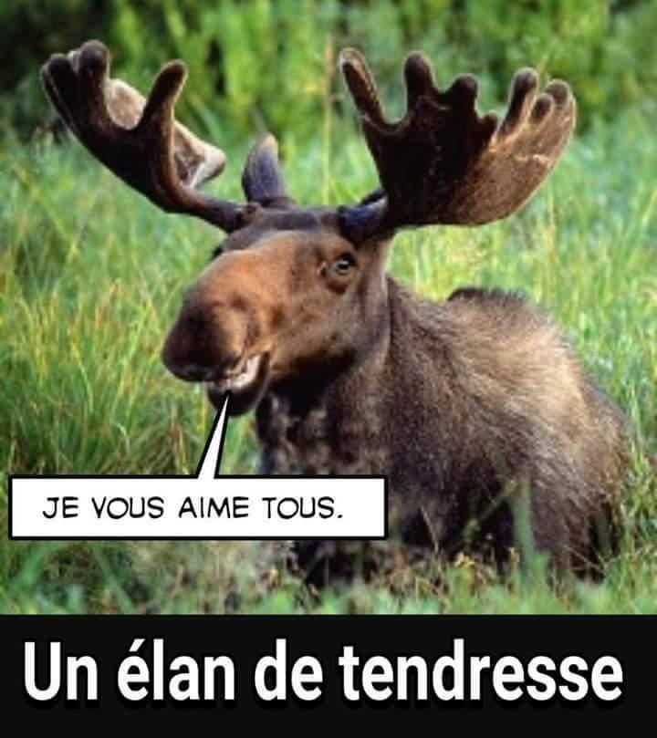 Je vous aime - Meme by DiegoBrouN :) Memedroid