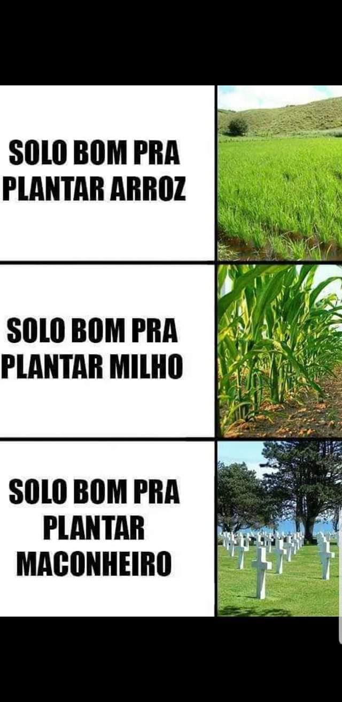 EL, EL, TOLDO MALCOMHERO DA O ANEU - meme