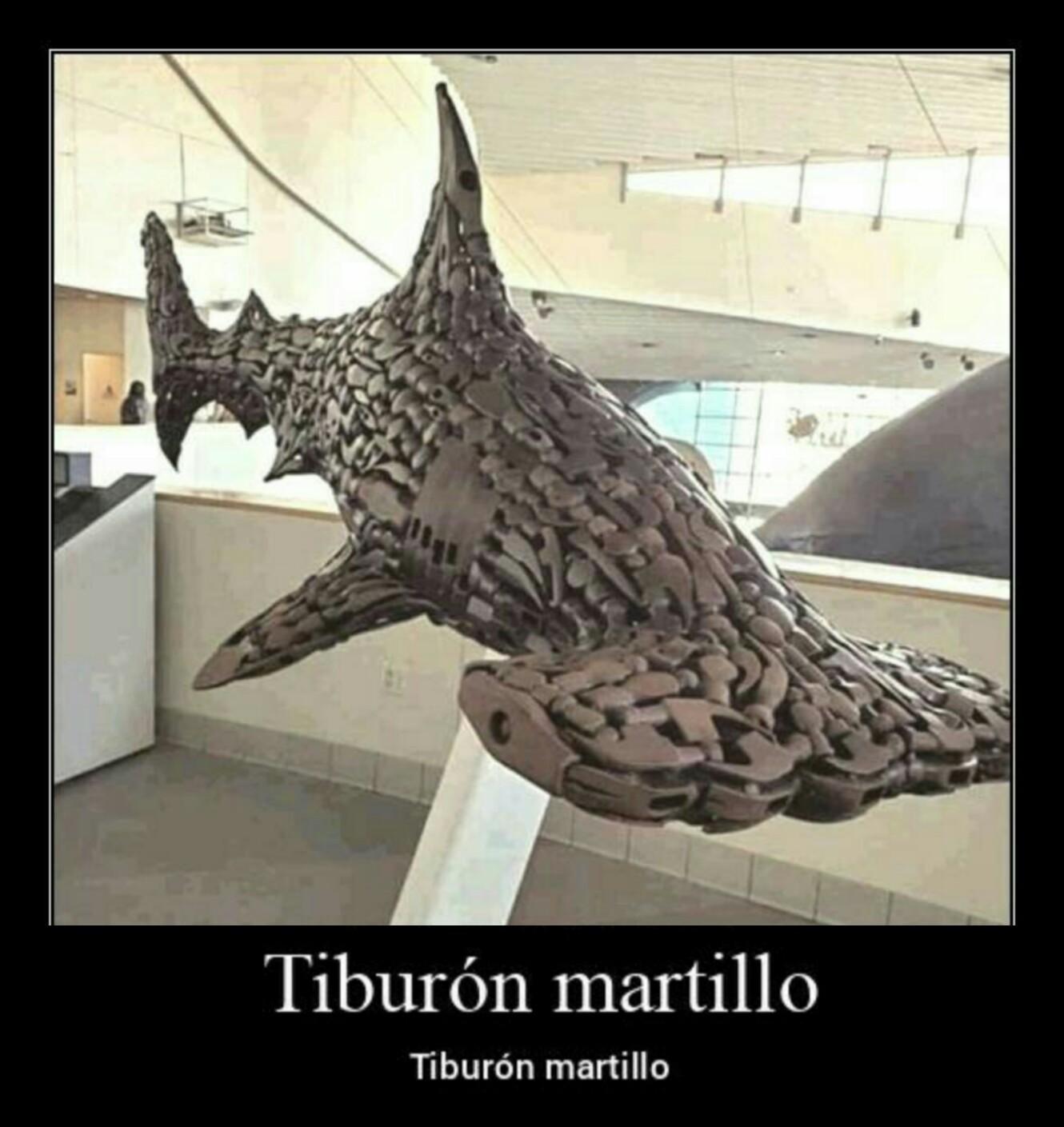 Tiburón martillo - meme