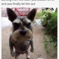 angry doggo