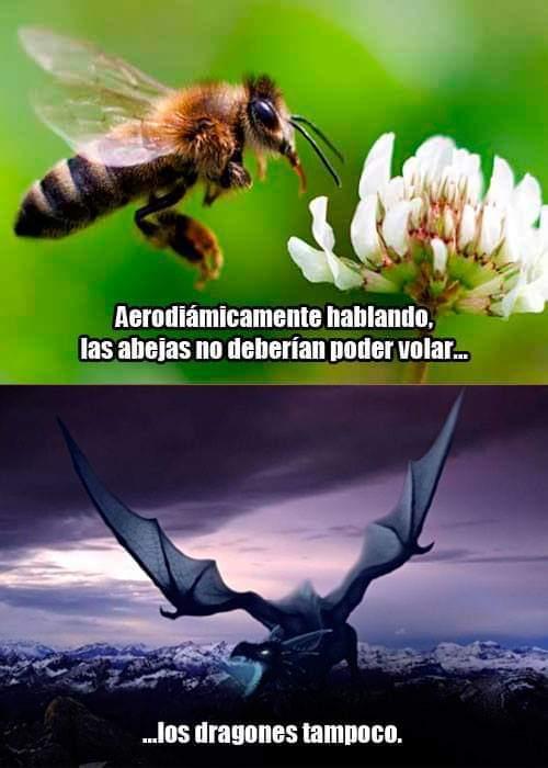 La aerodinámica del dragón vs abeja - meme