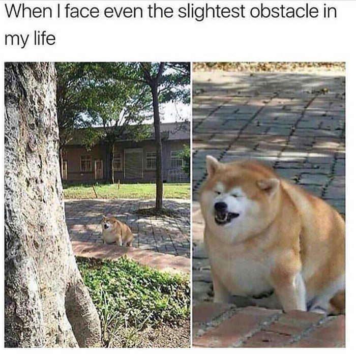 Daily struggle - meme