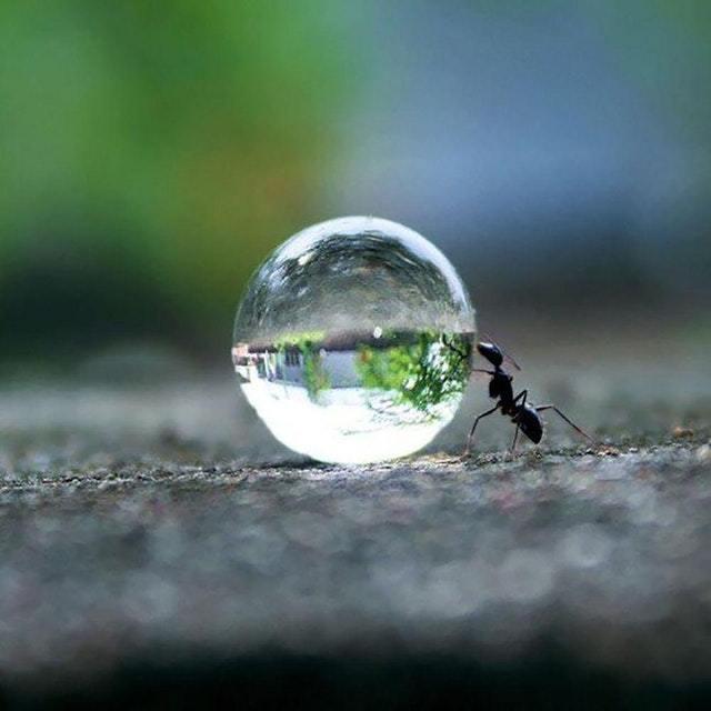 Ant rolling a water drop - meme