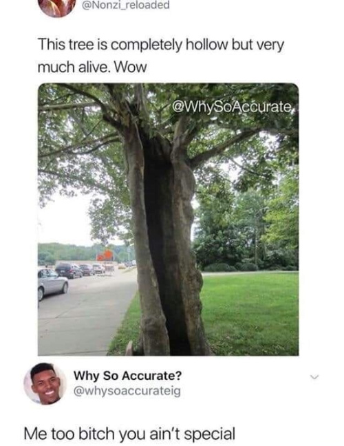 Nature is amazing! - meme