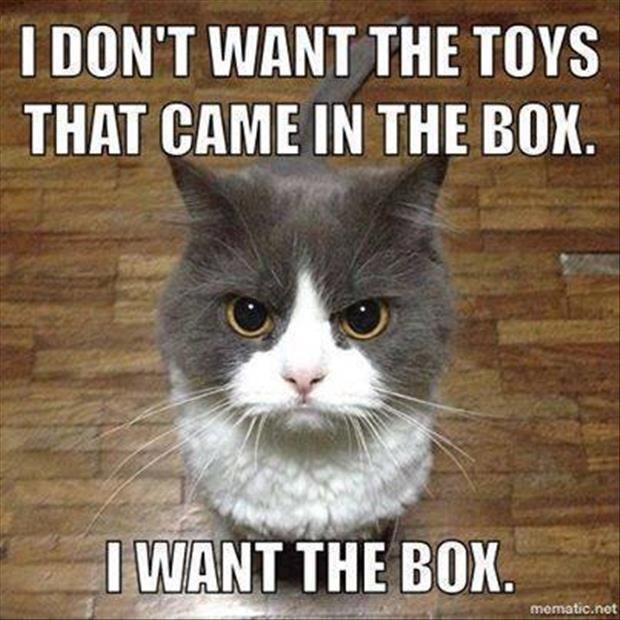 Cats Are Weird - meme