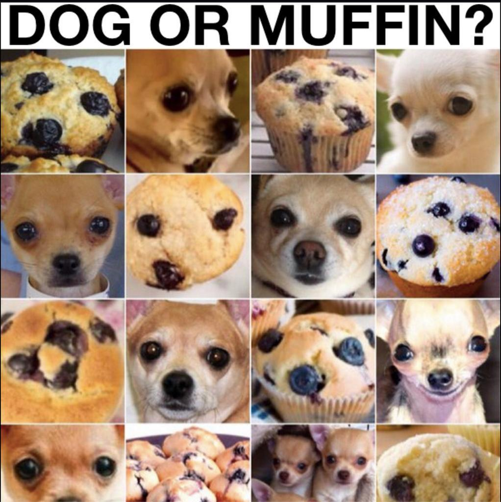 Dog or Muffin? - meme