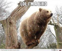 birdbear - meme
