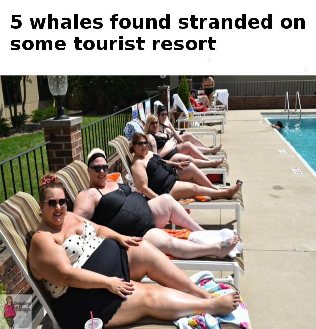whales - meme