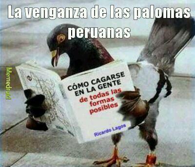 Palomas peruanas - meme