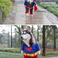 I want that costume. 37 of them