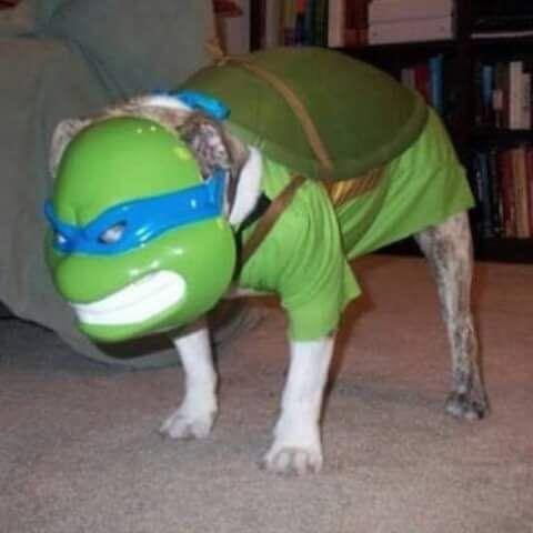 Doggo tartaruga - meme