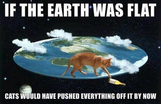 Damn cats - meme