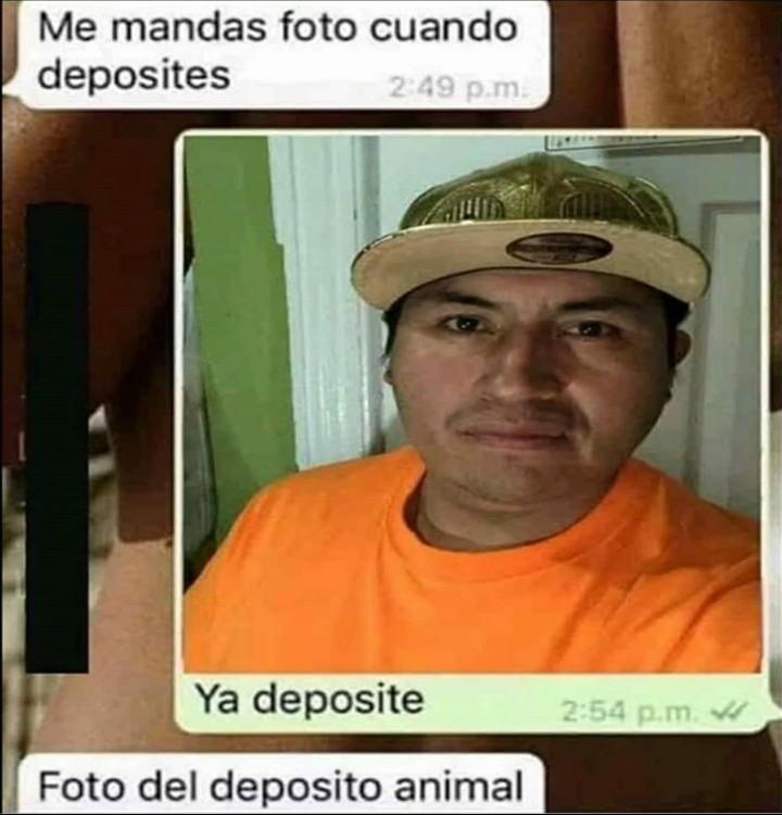 Foto del depósito animal - meme