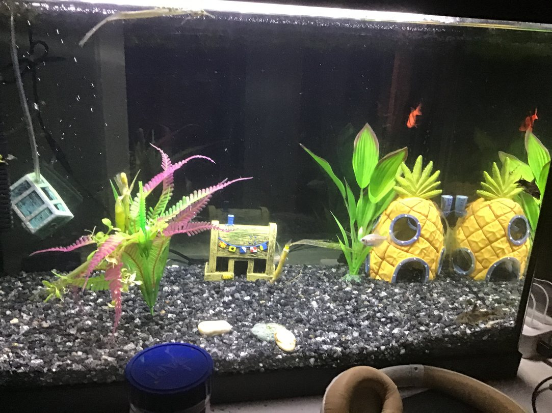 These are my fish. They have returned to wish you a happy Friday. - meme