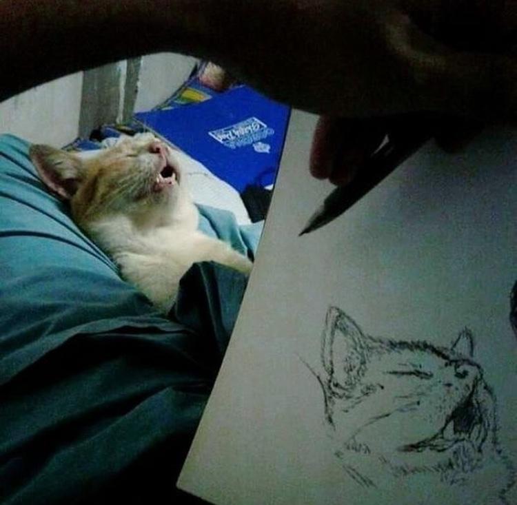 drawing the sleepy - meme