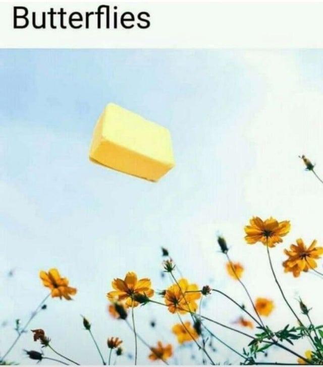 Butterflies - meme