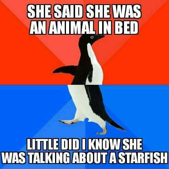 Sexy starfish? - meme