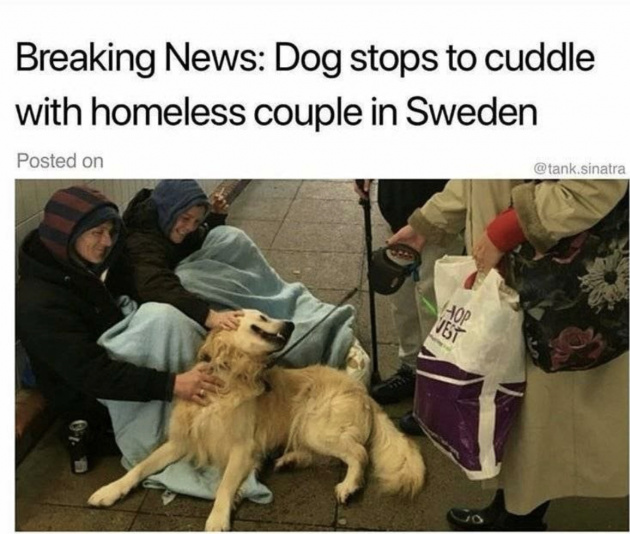 Wholesome News Story #9 (may be a repost but who cares We all need extra cute in our lives) - meme