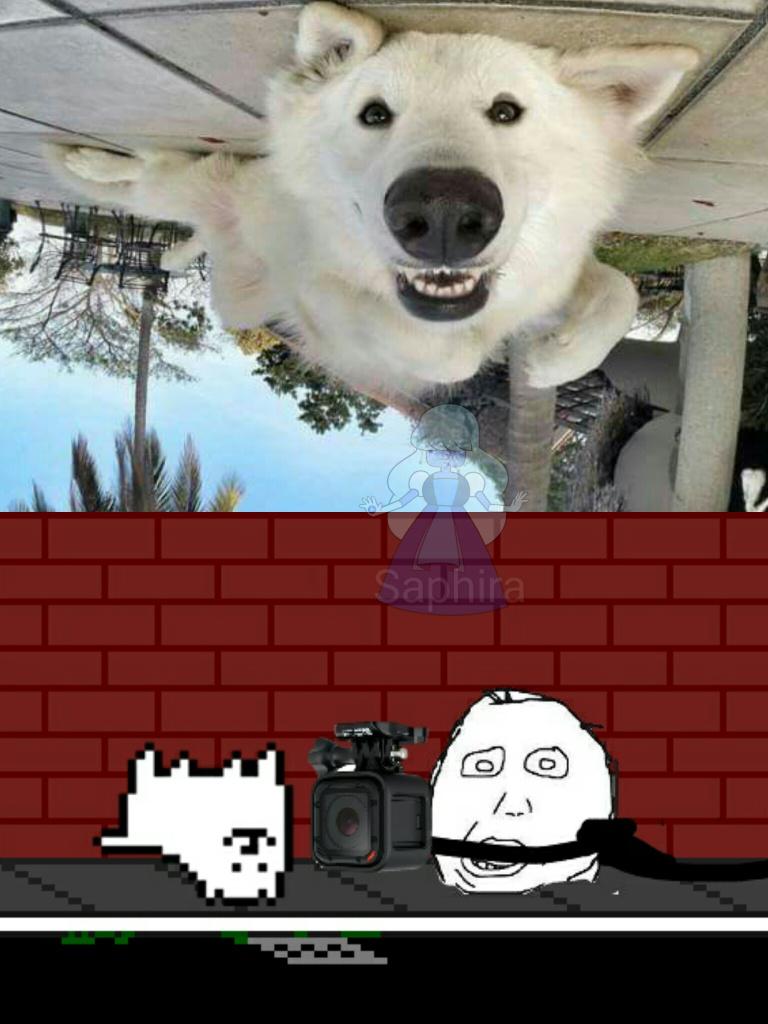 Os cara nao deixam mais o cachorro ficar na dele - meme