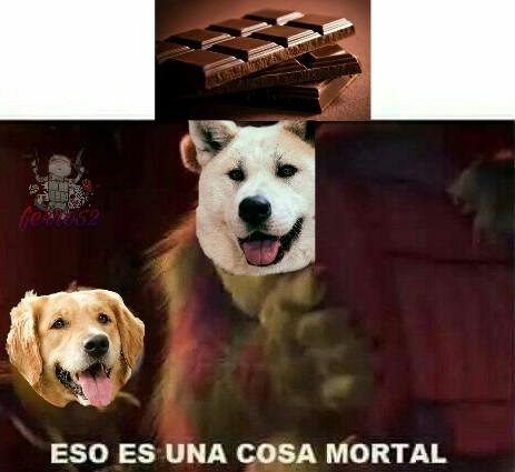 Y recuerden amigos, si le dan chocolate a su perro se muere. Hasta la próxima amigos. - meme