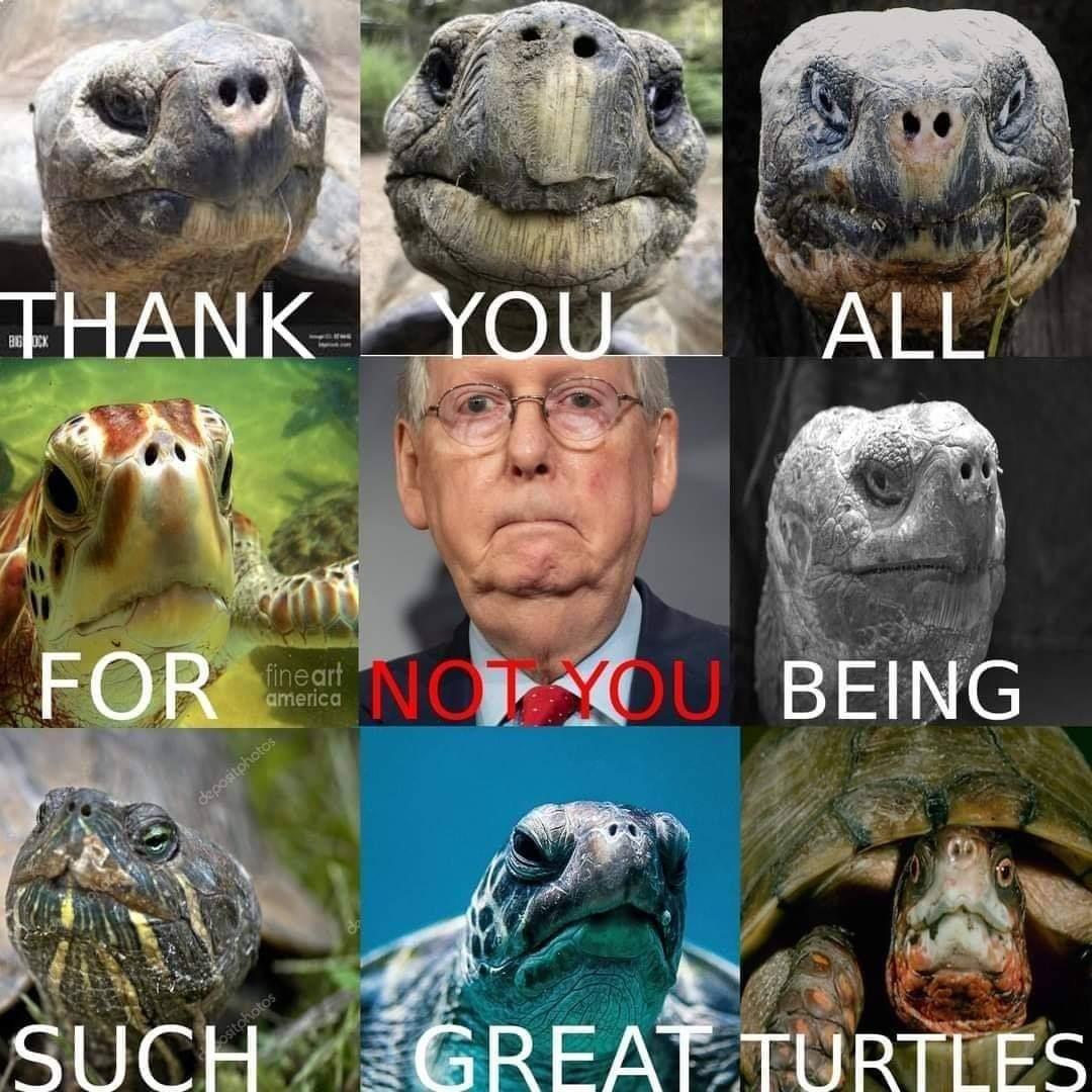 Screw you turtle face - meme