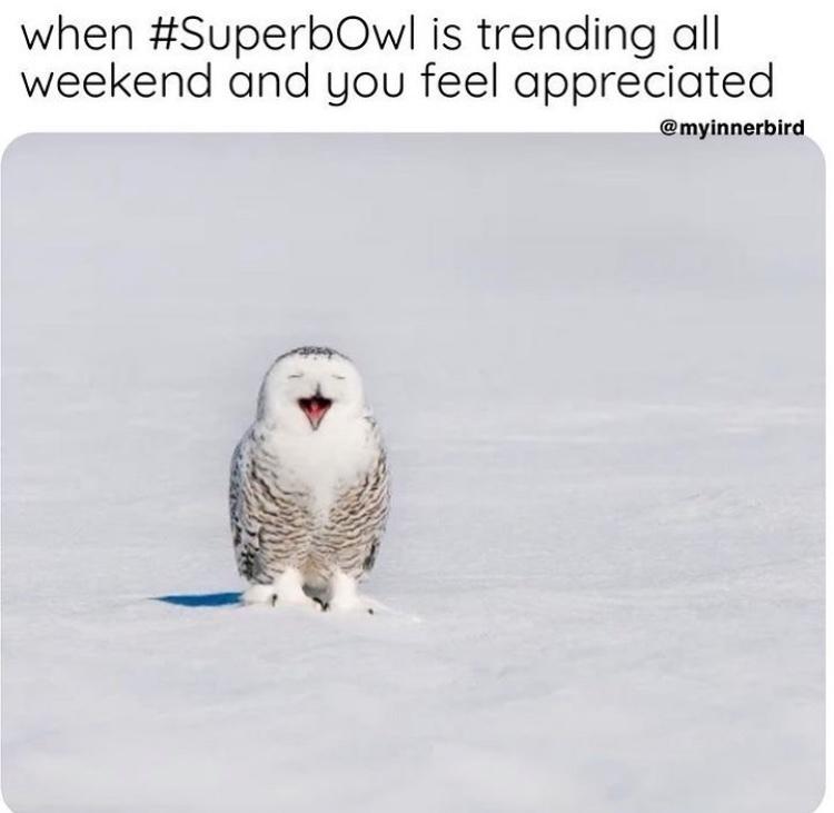 superb owl - meme
