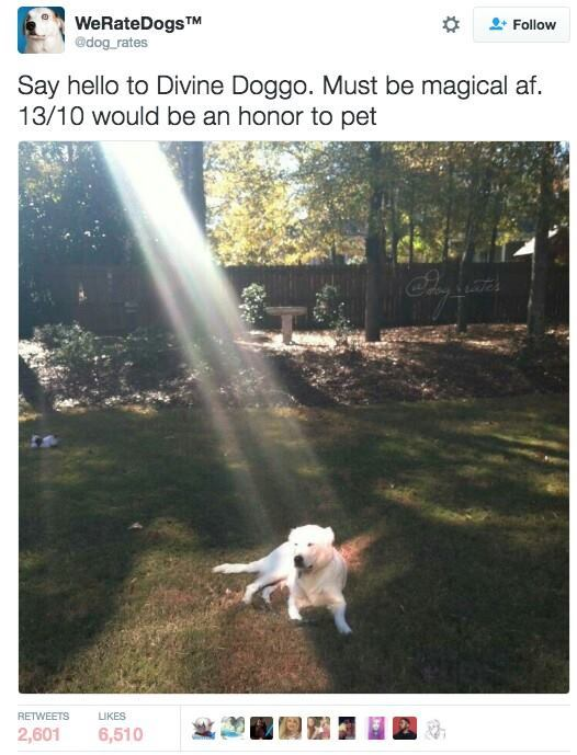 Doggooo - meme