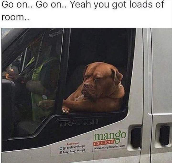 This dog... - meme