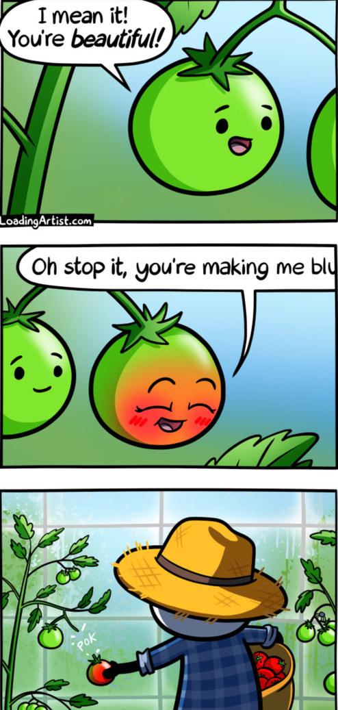 Tomato tamoto - meme