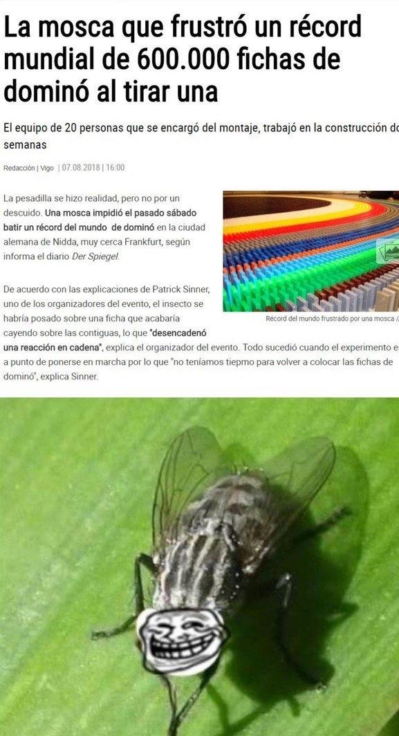 el título está cazando moscas - meme