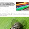 el título está cazando moscas