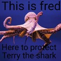 Terry protecter