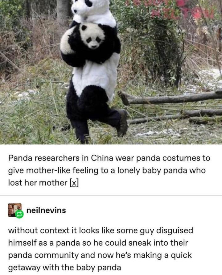 Panda - meme