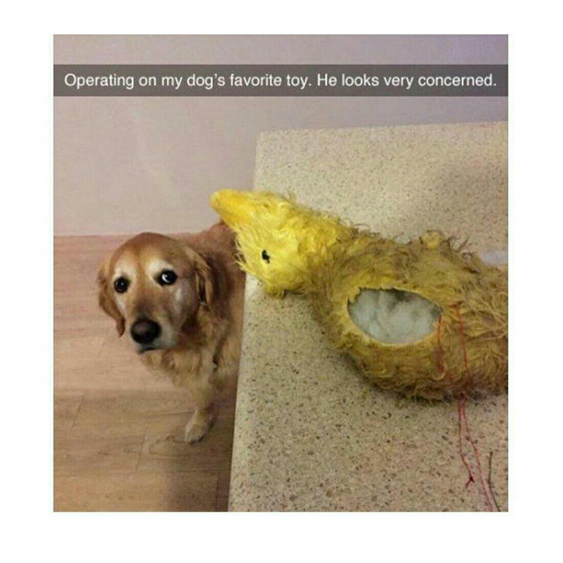 Please tell me mr.duck ll be great again - meme
