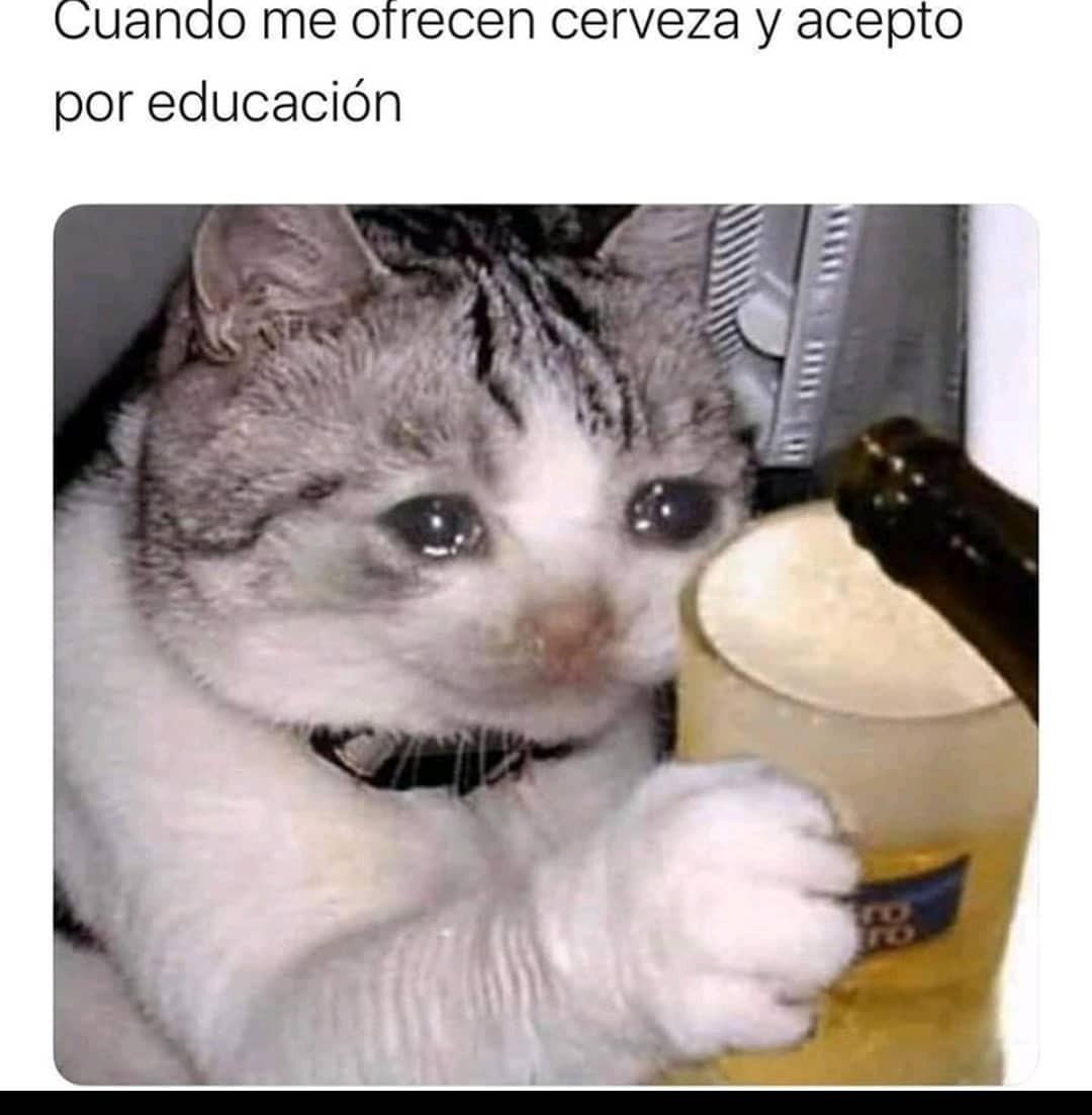 Top Memes De Gatos En Espanol Memedroid